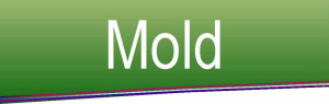 Mold Flyer Tag
