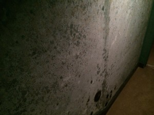 Mold growing on the wall. Karl Enviromental Group provides mold testing and mold remediation for businesses and residents throughout Berks County PA.