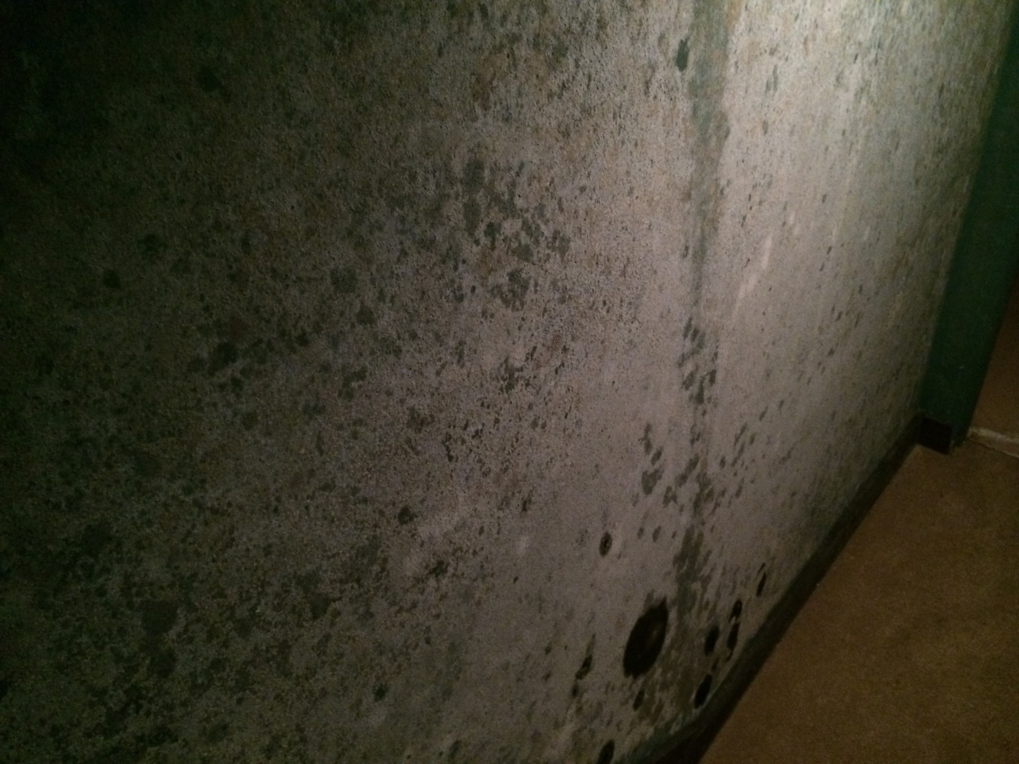 Behind the Scenes: The Mold Remediation Process